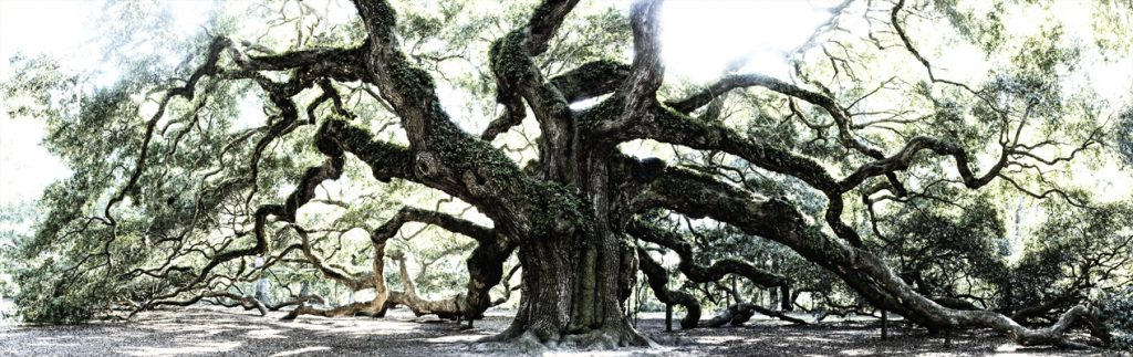 angel oak12x38small